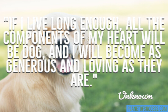 All the components of my heart will be dog quote